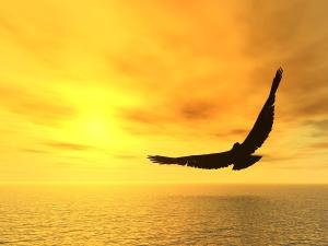 aguila-volando-mar