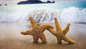 estrellas-de-mar-300x169