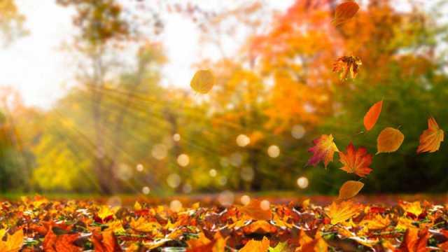 hojas que caen